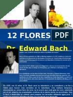 12 Flores de Temperamento