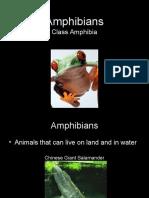 Amphibians.ppt