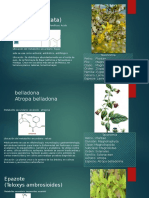 infograma (1).pptx