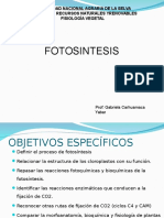 Fotosintesis CSA