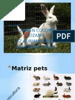 Matriz Pets Conejos