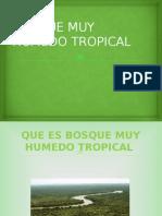 Bosque Muy Húmedo Tropical