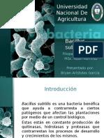 Bacillus Subtillis y Stinernema Sp