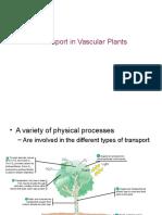 3.3 Plant Transport-MNR