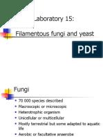 Filamentous fungi and yeast