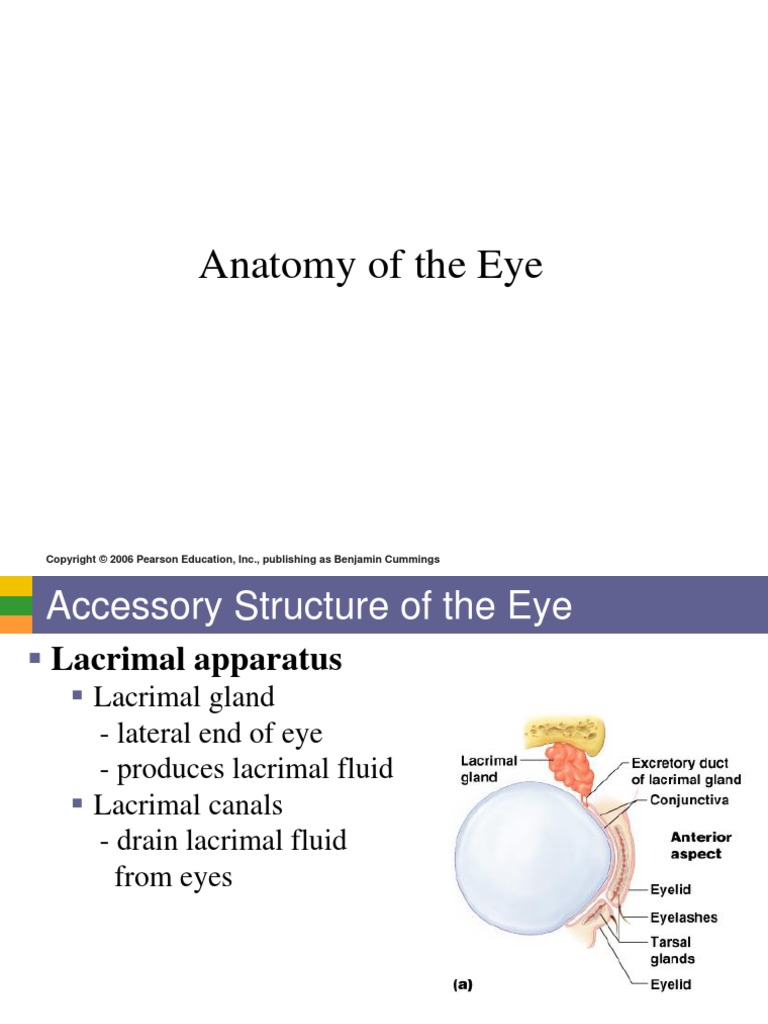 ANATOMY OF THE EYE.pdf | Human Eye | Retina