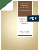estructura_sistema_nervioso.pdf