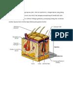 Struktur Kulit