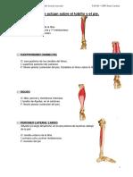 Fundamentos_tema22. Anatomia s.musc Parte4