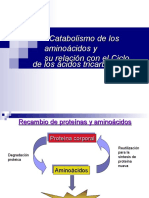 1.Catabolismo de los aminoácidos. concurso 2010.ppt