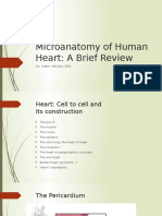 Microanatomy of Human Heart