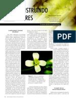 construcao de flores.pdf