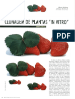 clonagem de plantas in vivo morango.pdf