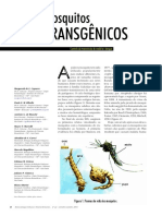 Mosquito Transgenico x