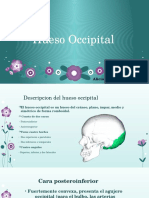 AliciaHueso Occipital