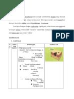 Lesi Dan Diagnosa Banding Can. Pseudomembranosus Akut
