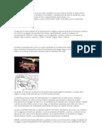 Anatomia Genital de Bovinos
