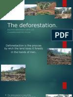 The Deforestation