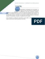 clasificación taxonómica características morfológicas de hortalizas