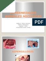 Enfermedades Animales Micóticas