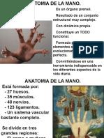 Microsistemas de pie y mano