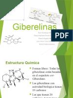 2.-GIBERELINAS-MODIF-ANA
