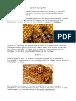 Conoce-El-Propoleo.pdf
