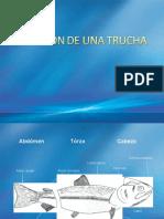 diseccindeunatrucha-110613032423-phpapp01