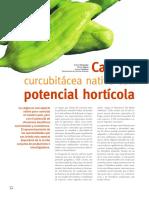 caigua_horticola (1)