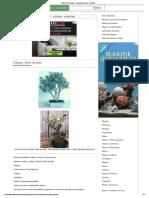 Crásula, Árbol de Jade - Crassula Arborescens - BONSAI