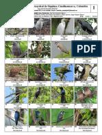 754 Aves Guayabal de Siquima