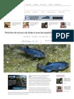 Peixinho-do-buraco-do-diabo é Uma Das Espécies Mais Solitárias Do Mundo - Mega Curioso