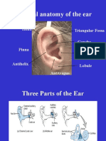 Anatomy of the Ear Hearing