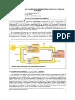 TEMA18-MICROORGANISMOS