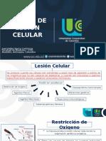 Causas de Lesion Celular