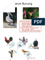 Bentuk Paruh Burung
