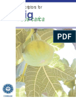 Descriptors for FIGS Ficus Carica