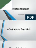 Envoltura Nuclear y Complejo Del Poro Nu