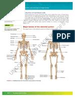 labelled skeleton