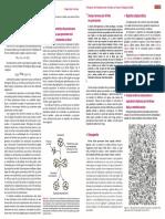Biologia Celular e Molecular 9ª Ed Junqueira & Carneiro