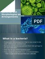 bacterial cell morphologies pptm