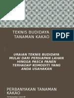Teknis Budidaya Tanaman Kakao