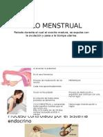 Gineco - Ciclo Menstrual