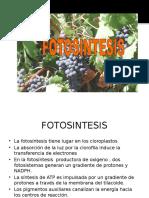 La Fotosintesis (1)