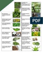 40 PLANTAS MEDICINALES.docx