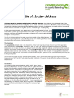 The Life of Broiler Chickens