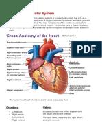 cardio-fact-sheet