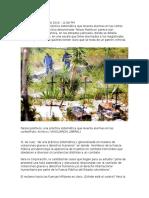 Falsos Positivos Cajamarca