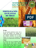 Fertilizacion en Plantas de Trigo