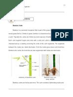Bamboost Module